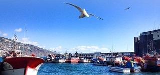 porto do Funchal espadeiros