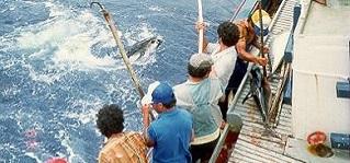 pesca atum