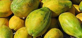 est papaia