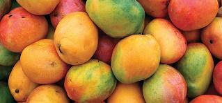 est mango