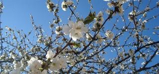 tempos de hortifruticultura2016 cerejeira