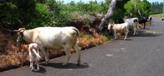 concentracoes de gado dica