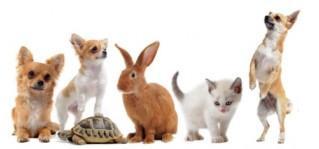 animais companhia capa