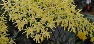 orquideas capa