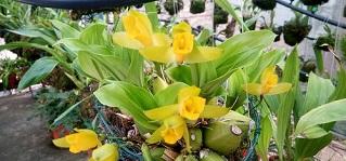orquideas inverno capa