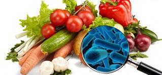 mestrado consumo alimentar capa