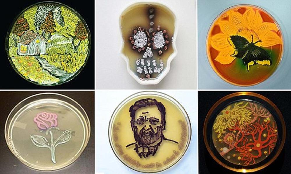 cores da microbiologiaII capa