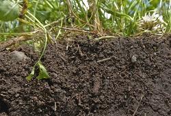 biodiversidade solo capa