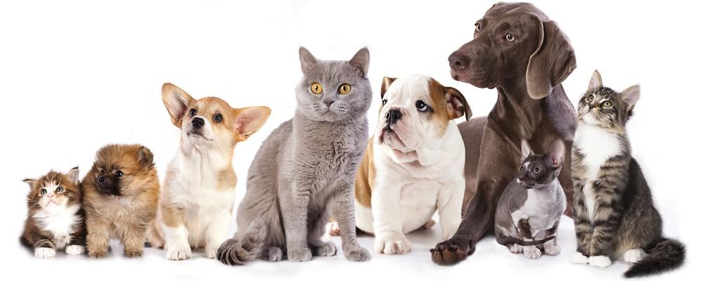 caes e gatos destaque