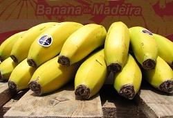 banana DICAcapa