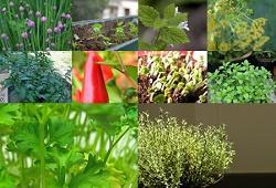 ervas aromaticas festa alegria capa
