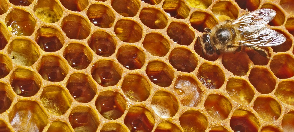 apicultura alimentacao destaque