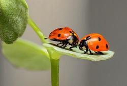 insetos auxiliares capa
