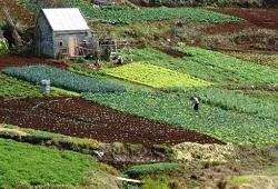 mais 5 milhoes para agricultores capa