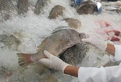 qualidade do pescado capa