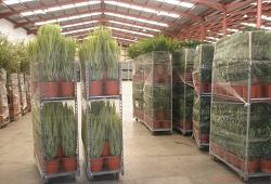 transporte plantas DICA