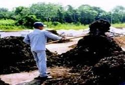 compostagem conclusao capa