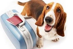 viajar animais companhia DICA