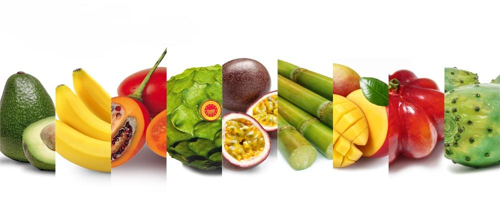 frutos tropicais destaque