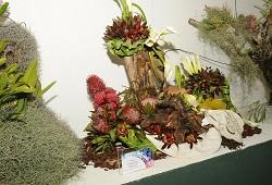 arranjo florais capa