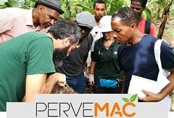 pervemac II votacao online capa