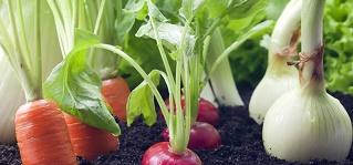 legumes na terraDICA