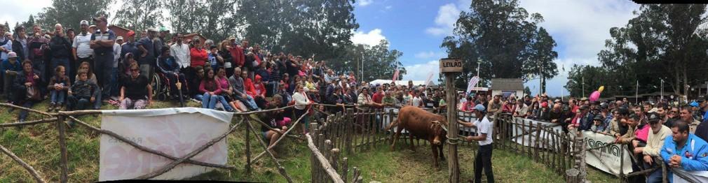 feira agropecuaria1