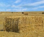 fig1c tipos de substrato palha de trigo