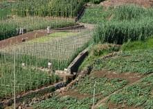 agricultura familiar 2