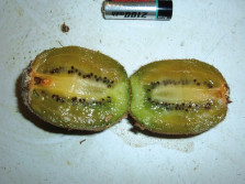 kiwi polpa verde escura consistencia mole 1