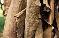 fig2a trituracao das materias primas palha de bananeira1