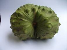 colheita pedunculo 1