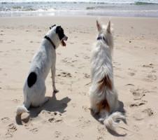 monitorizacao qualidade praias fig3 animais fonte contaminacao1
