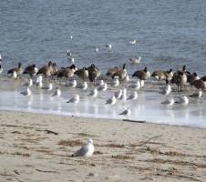 monitorizacao qualidade praias fig3 animais fonte contaminacao2