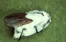 insecto coberto fungo 2