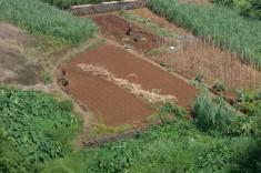 agricultura familiar 3