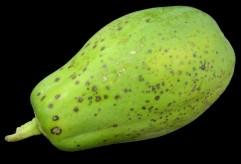 papaieira fruto