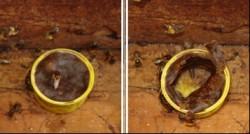 alimentacao artificial apiario 1