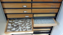 figura3 entomologia