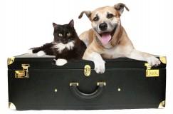 viajar com animais1