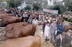 Feira Red Danish 1970