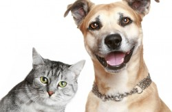 tratamentos identificacao cao gato