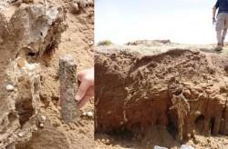 fig2 dunas da piedade moldes contramoldes raizes