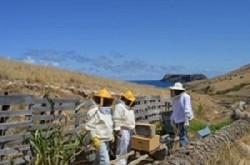 apicultura porto santo