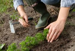 seguranca no trabalho agricola1