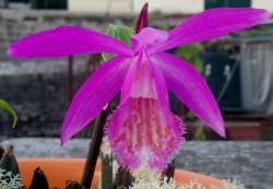 orquideas3