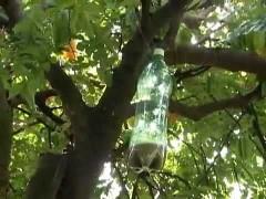 garrafa mosqueira