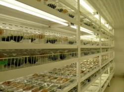 microlab sala de cultura das orquideas