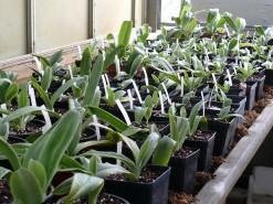 aclimatizacao plantas estufa1