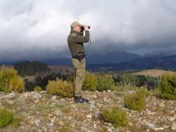 p florestal vigilancia